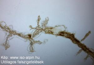 Iso-alpin02